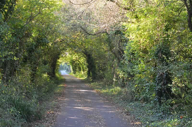 An amazing example of linear woodland, along the Cowes to Newport cycle track.