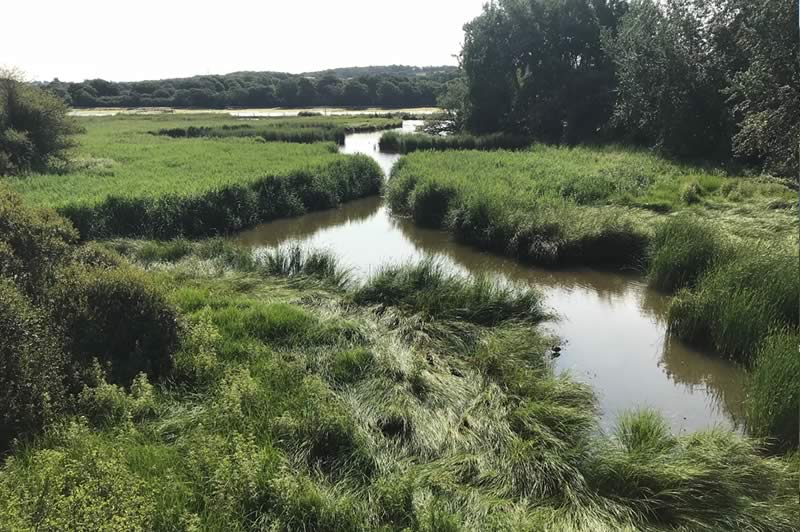 Dodnor Creek from the bridge.